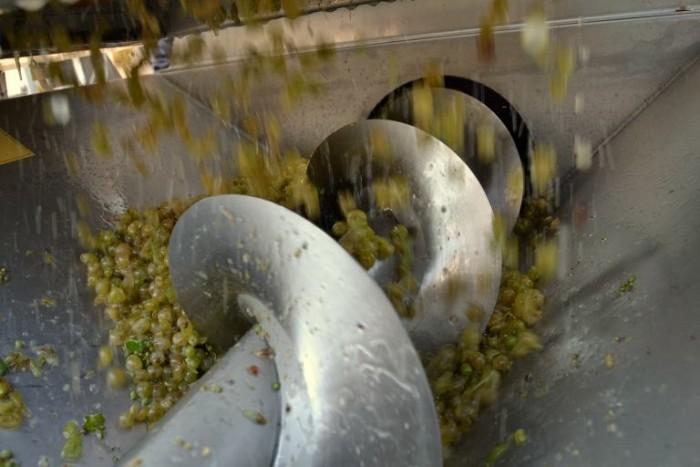 Chieti Scalo: Lavorazione olive nel fiume, frantoio sequestrato