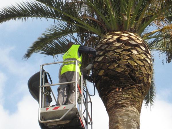Alba Adriatica: lungomare, palme addio…