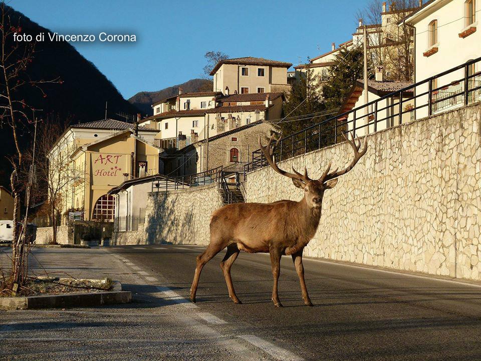 Villetta Barrea: cervo in posa per la foto