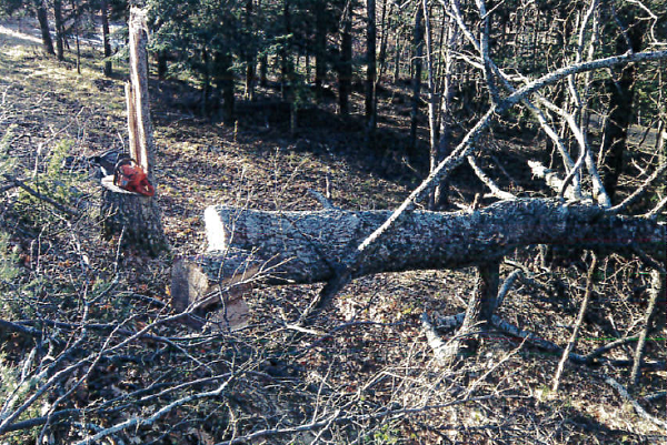Cortino, rimane schiacciato mentre taglia albero