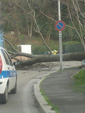 Abruzzo : vento forte, disagi e danni
