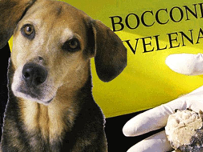 Torricella Sicura: E' caccia all'avvelenatore di cani
