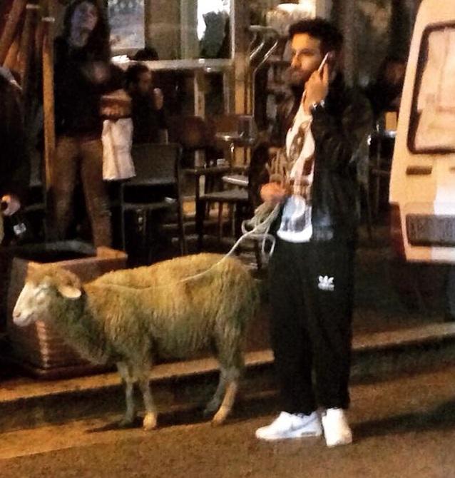 """""""Il Falco"""" a spasso con una pecora a Cassino"""