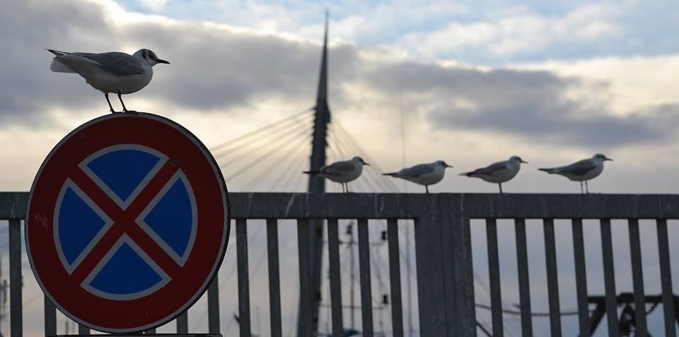 Pescara: …e il gabbiano violò il divieto
