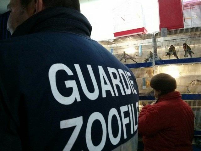 L'Aquila: Guardie Zoofile alla Fiera dell'Epifania
