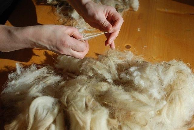 L'Aquila: un bando per recuperare e valorizzare la lana