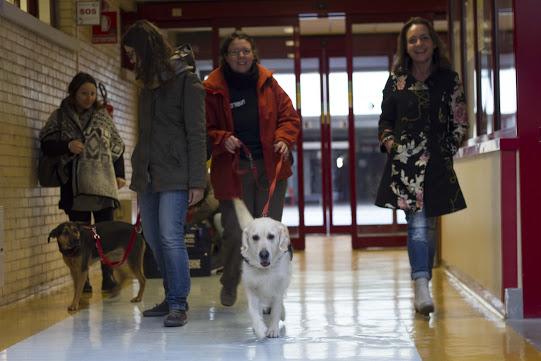L'Aquila: i cani entrano in ospedale