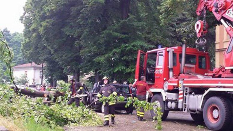 cade albero, donna ferita