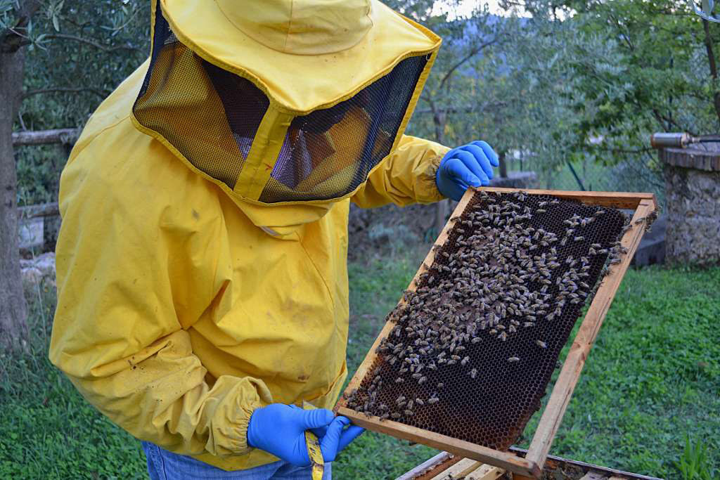 L'Aquila: Veterinari a scuola di apicoltura
