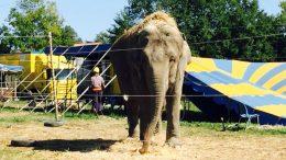 circo-recinto