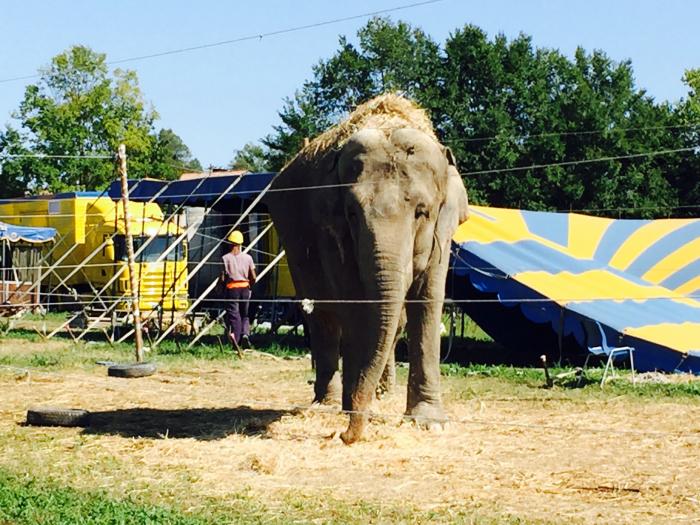 Ortona: il recinto del circo che dà la scossa