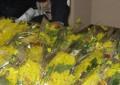 L'Aquila: vendita fiori per 8 marzo, no all'abusivismo