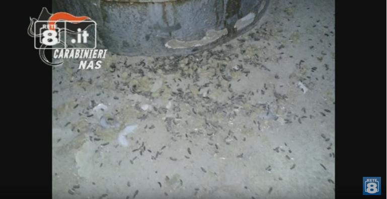 Nas Abruzzo, topi e insetti nei mangimifici