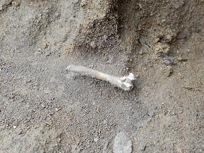 Torino di Sangro: il cane trova un osso umano