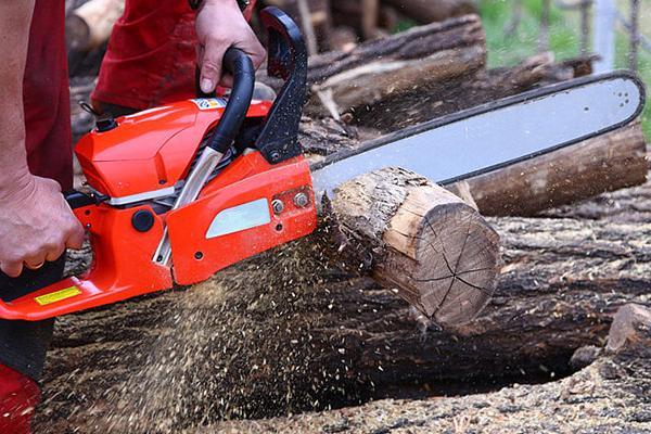 Pescara, tagliati alberi per cantiere edile