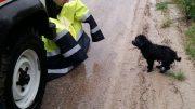 cucciolo-salvato1