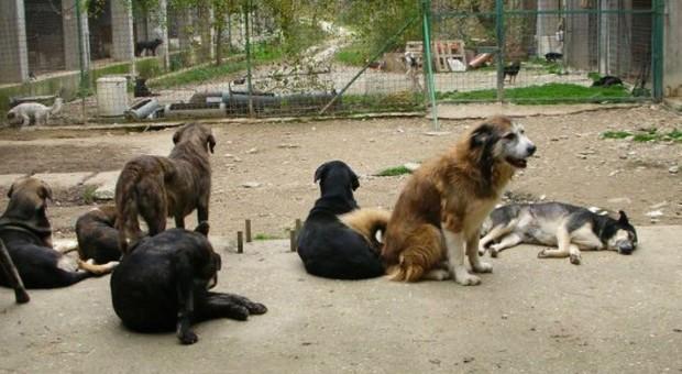 La guerra sui cani finisce in tribunale