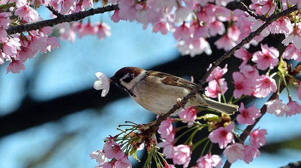 20 marzo, oggi l'equinozio di primavera
