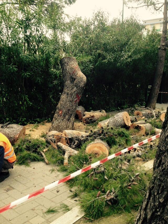 Pescara: cittadini denunciano pini abbattuti da Comune