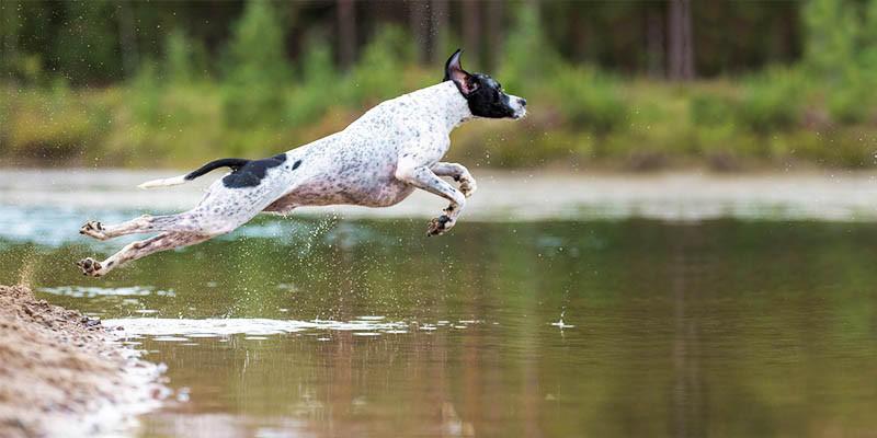 Il WWF critica la legge sui cani nelle aree protette