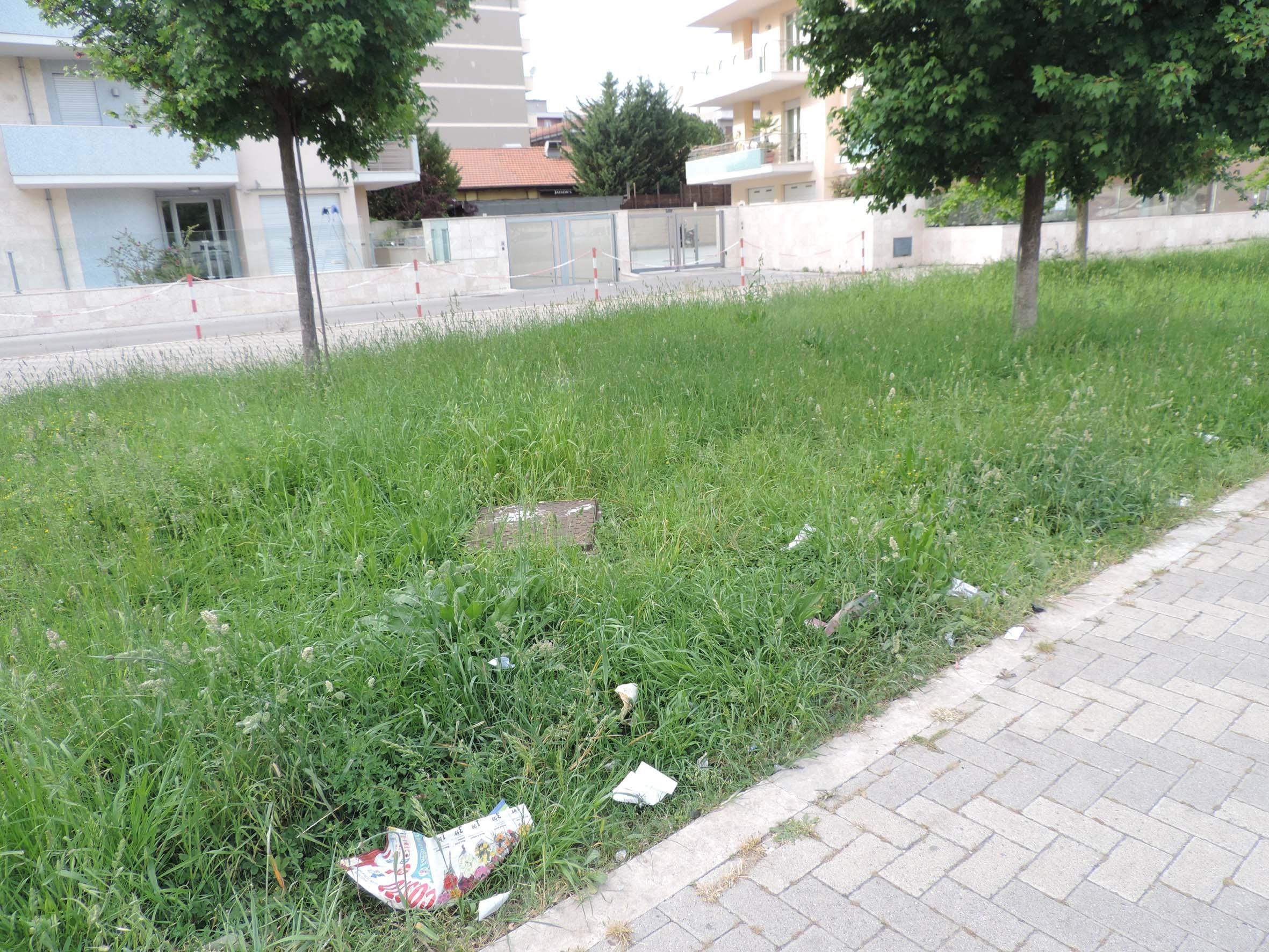 F.I. sollecita cura del verde in Via D'Ascanio