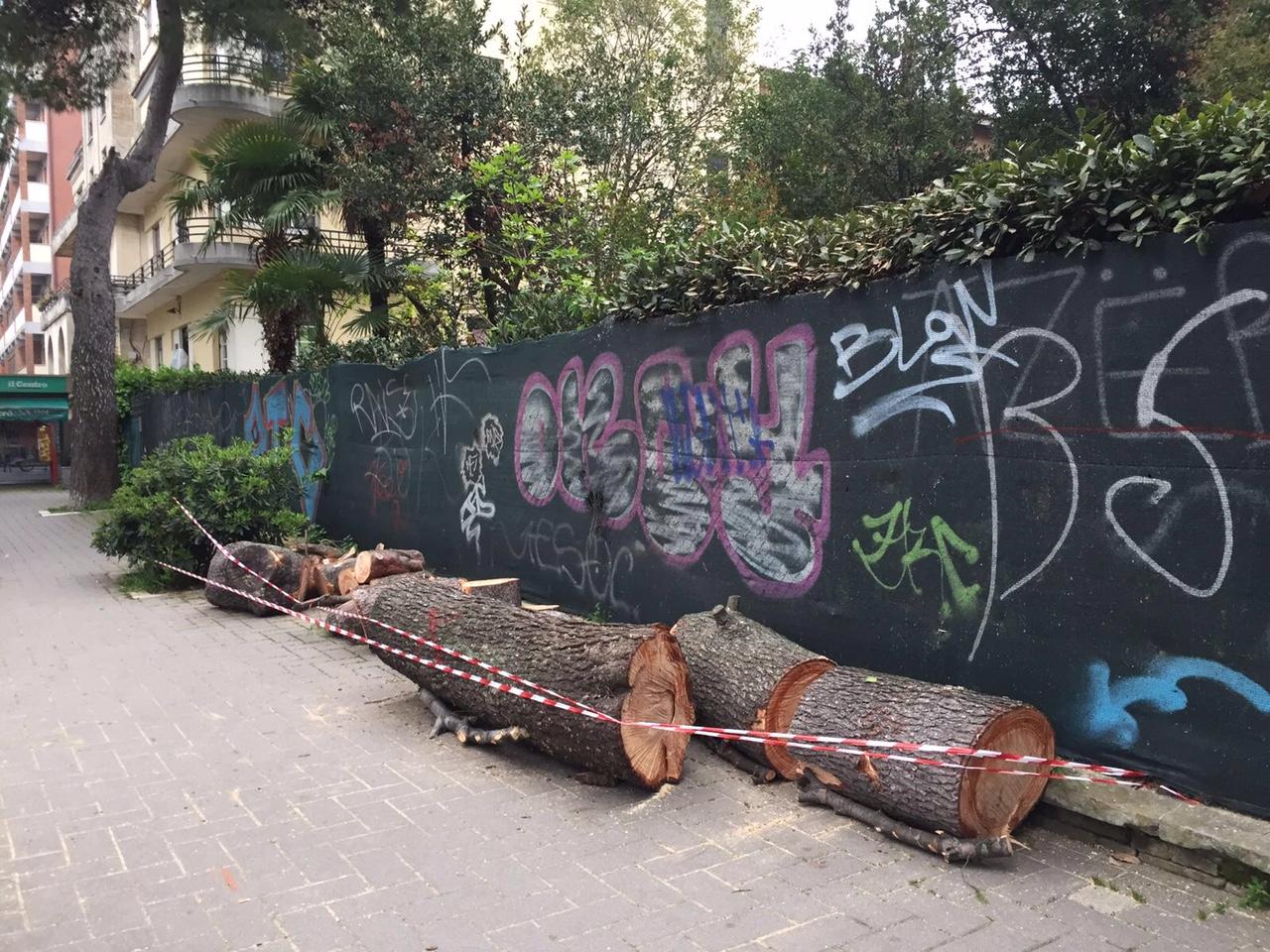 Pini abbattuti: F.I. chiede atti in Comune