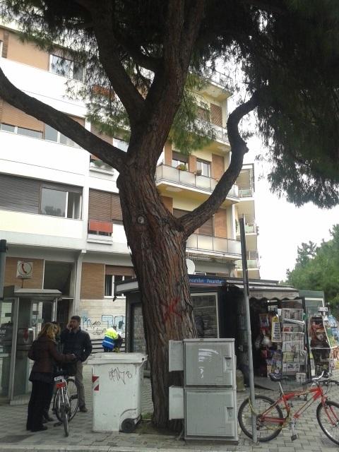 Pini viale Margherita: il Tar accoglie il ricorso del Comune di Pescara