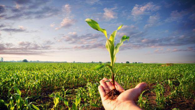 Agricoltura: in arrivo 7 milioni di euro per il biologico