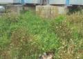 Ortona: carcassa di animale vicino ospedale