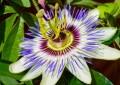 A Pescara torna la 41^ mostra del fiore