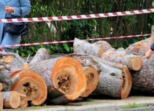 Ambientalisti contro i tagli degli alberi a Pescara