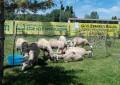 Emergenza Abruzzo: animali e allevatori in piazza a Roma