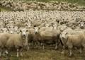 L'Arpo denuncia: Abruzzo abbandonato, D'Alfonso ci ascolti