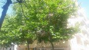 alberi-case-pescatori1