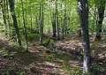 Pescasseroli: 11 scout dispersi nel bosco