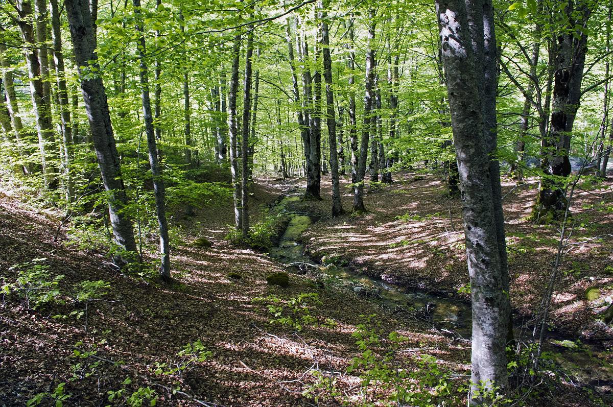 """Agronomi d'Abruzzo: """"I boschi sono in stato di abbandono"""""""