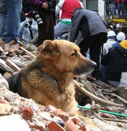 L'Aquila: è morto Pluto, il cane simbolo del dopo sisma