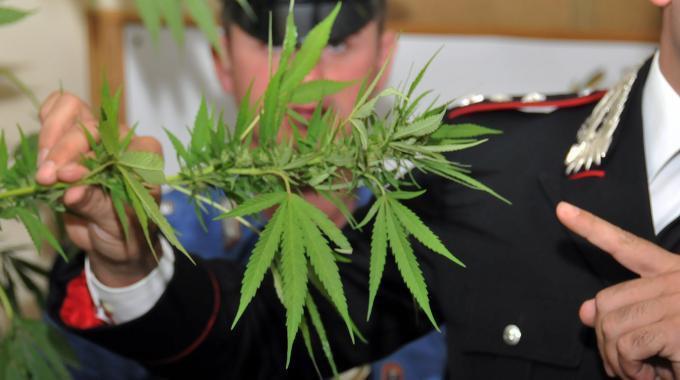 Stanza occultata per coltivare marijuana a Tortoreto, uomo denunciato