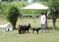 Campotino, il mistero dei cani scomparsi
