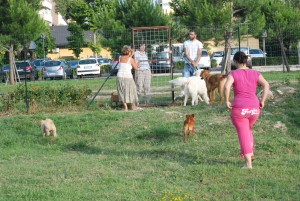 dog village 2