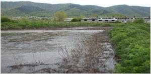 fiume inquinamenti maiali