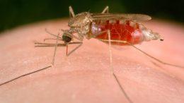 malaria11