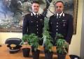 Perano: piante marijuana in serra, denunciato 35enne