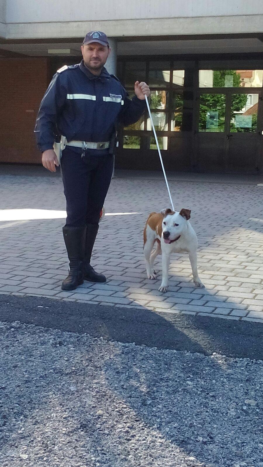 Pescara: pitbull a scuola tra studenti, riconsegnato al padrone
