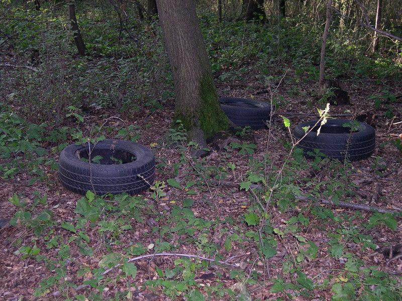 San Buono: volontari puliscono bosco da pneumatici