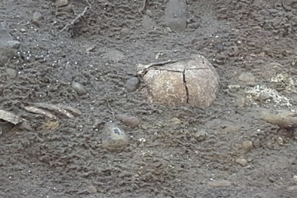 Punta Aderci, rubati scheletri risalenti al 1800