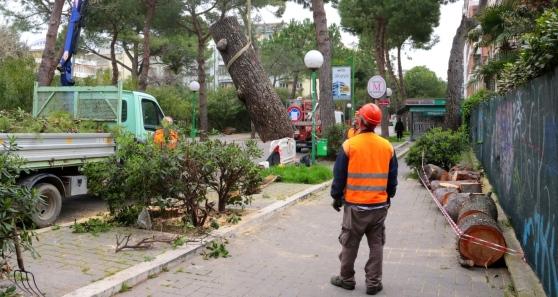 Taglio dei pini nuove polemiche