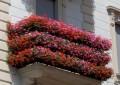 Chieti: balconi e vicoli fioriti in concorso