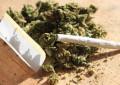 Pescara: i Radicali per la legalizzazione della cannabis