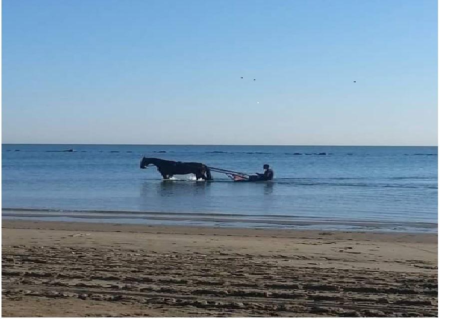 Cavallo con calesse in mare a Pescara